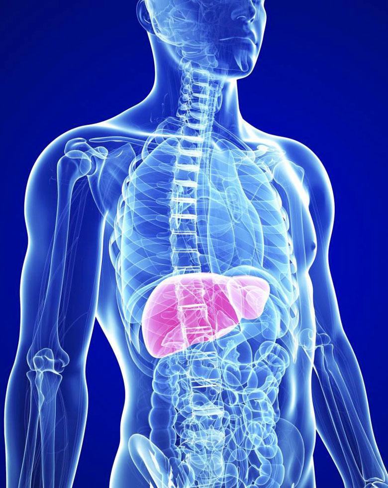 sos-hepatites-321